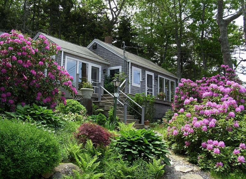 Rhododendrons at Paradise Cottage