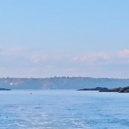 """Our """"New-to-us"""" motor boat took us for a Fall Foliage tour up the Sheepscot"""