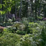 Vignettes in our summer garden