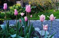 Highlights of our June Garden
